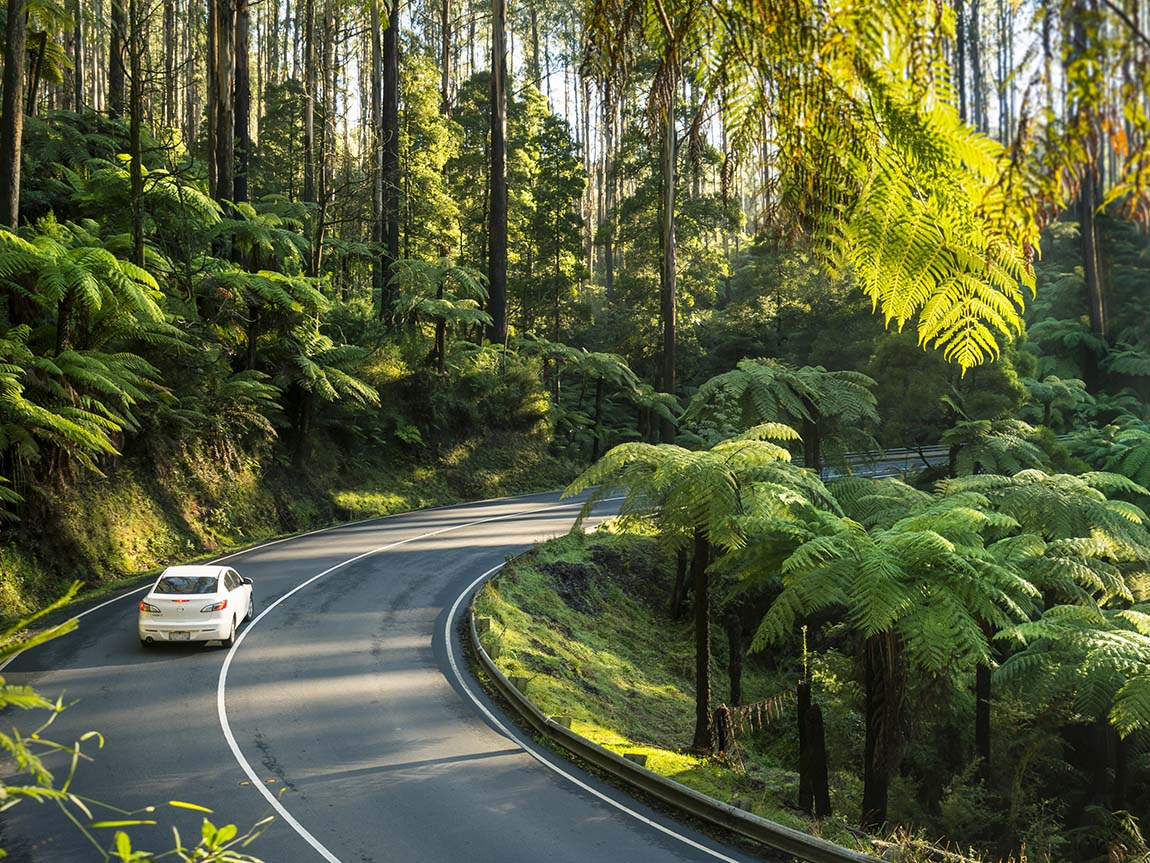 Driving the Black Spur, Yarra Valley and Dandenong Ranges, Victoria, Australia